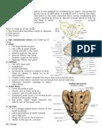 Female pelvis.doc