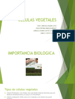 Celula Vegetal - FINAL