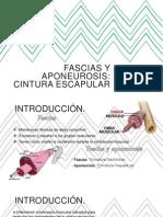 Fascias y aponeurosis Cintura Escapular.pptx
