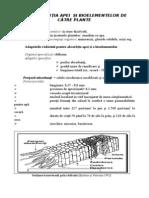 Absorbtia-II.pdfAbsorbtia-II.pdfAbsorbtia-II.pdf