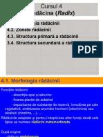 RADACINA modific..PPT