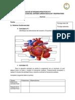 Guia N° 2  Cardiovascular-Respiratorio