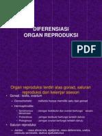 11. Diferensiasi Organ Reproduksi