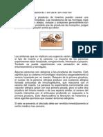 Mordedura y Picadura de Insectos