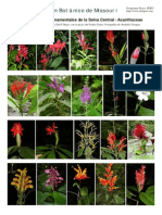 Plantas Ornamentales en La Selva Del Peru
