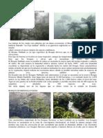Tipos de Bosques en El Ecuador