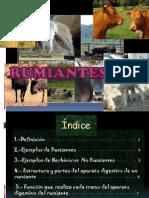rumiantes-1208852997960896-9