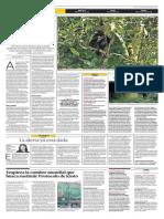 Un encuentro con el mono choro del Gran Pajatén.pdf