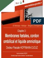 Membranes Foetales