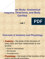 Lab 1  The Human Body.ppt