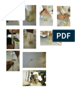 Extraccion de ADN Practica de Bioquimica