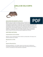 RATÓN CHINCHILLA DE COLA CORTA