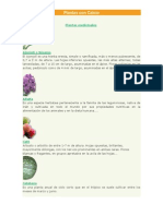 Plantas Con Calcio (1)