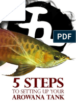 5 steps to setting up your arowana tank