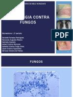 Slide Fungos