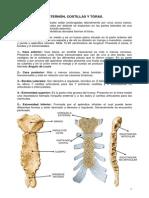 Osteologia de Torax