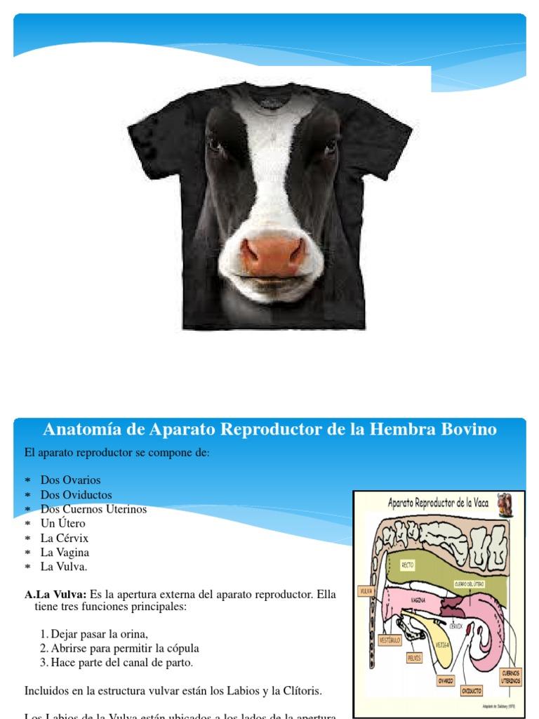 Vistoso Ternero Vena Anatomía Ideas - Anatomía de Las Imágenesdel ...
