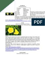 botani phanerogamae.doc