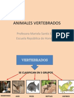 animalesvertebrados-111228210535-phpapp02