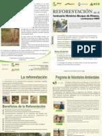 Reforestacion Pomac .Eco- Siembra Vida