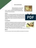 Ciclo de vida del pollo.docx