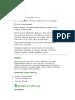 Abóbora - Cucurbita pepo L. - Ervas Medicinais - Ficha Completa Ilustrada