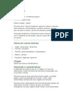 Alfarroba - Ceratonia siliqua L. - Ervas Medicinais - Ficha Completa Ilustrada