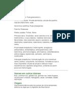 Arruda - Ruta graveolens L. - Ervas Medicinais - Ficha Completa Ilustrada