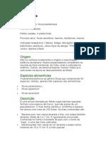 Banana - Musa paradisiaca - Ervas Medicinais - Ficha Completa Ilustrada