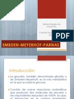 Embden Meyerhof Parnas