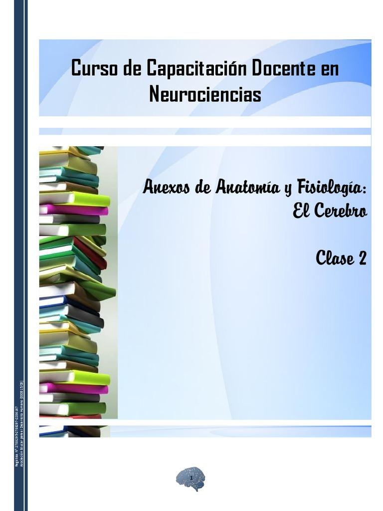 Anexos de Anatomía y Fisiología - El Cerebro