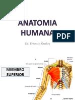 Anatomia Clase 2