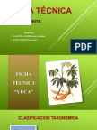 Ficha Técnica - Camote
