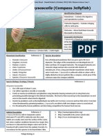species data sheet - compassjelly