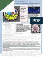species data sheets - phytoplankton