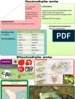 Plectrohyla Avia