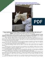 Researchers Create Equine Jugular Vein Injection Simulator