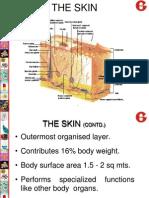 Skin - basics