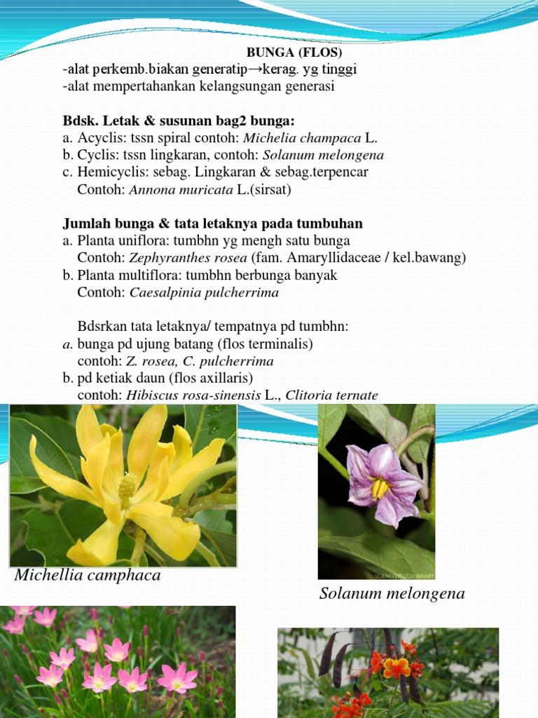 Bunga ccuart Images