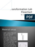 transformation lab flowchart