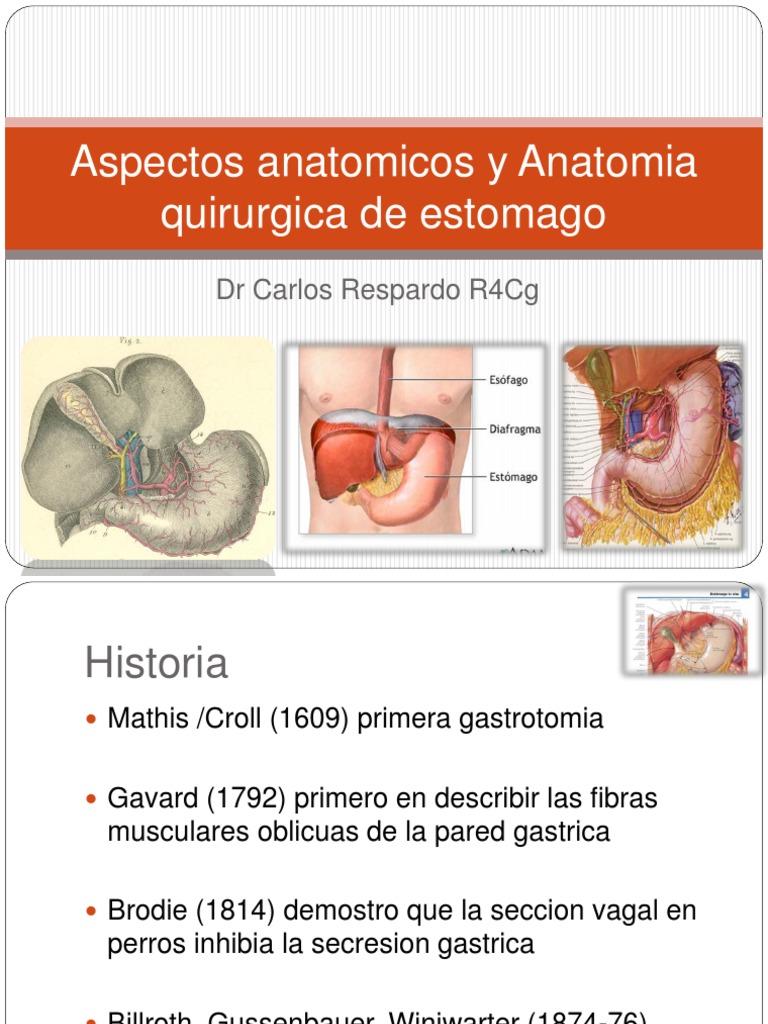 Aspectos Anatomicos y Anatomia Quirurgica de Estomago