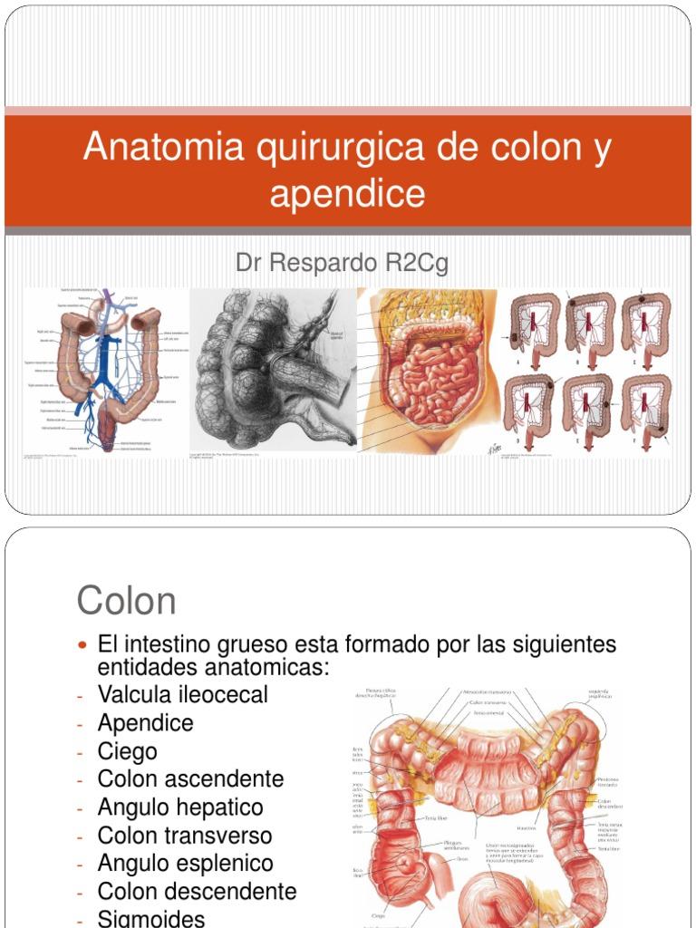 Anatomia Quirurgica de Colon y Apendice