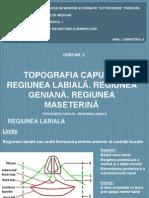 Curs 2 Topografia Capului Regiunea Labiala Geniana Maseterina