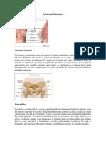 Anatom a Femenina