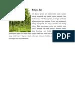 Pohon Jati.docx