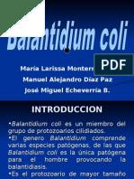 balantidium