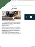 Oriente Médio_ Bombardeio israelense agrava crise na Síria - Resumo das disciplinas - UOL Vestibular.pdf