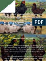 Proiect SFP ppt
