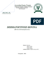 Dermatofitosis Bovina