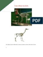 Anatomia de Los Animales